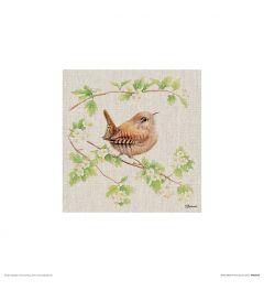 Winterkoninkje Art Print Jane Bannon 30x30cm